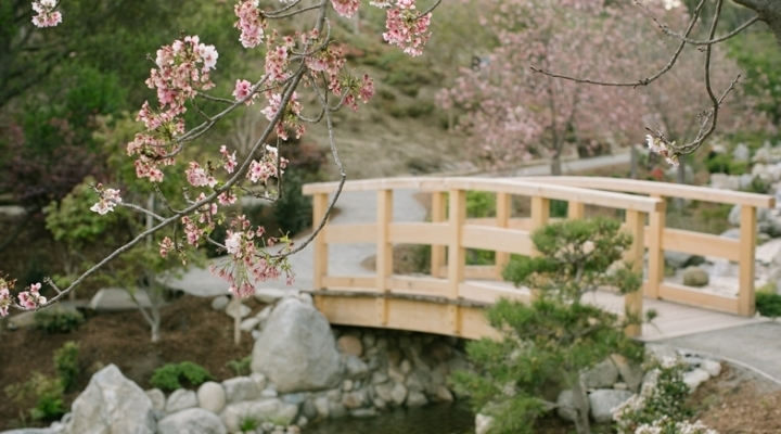 japanese friendship garden crown point catering - Japanese Garden Cherry Blossom Bridge